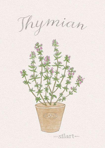Happy Draw Thymian Illustration Esszimmer Dekor Ideen Zeichnung