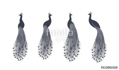 Peacock logo Isolated peacock on white background