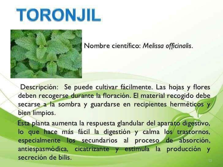 Pin De Myriam Valdivieso En Vida Saludable Farmacia Natural Con