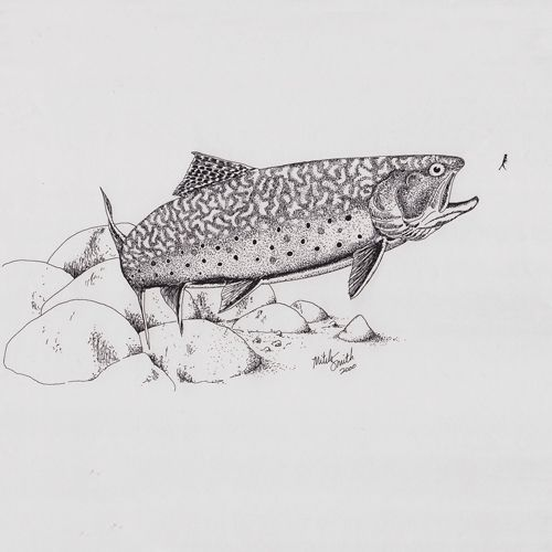 Pin by todd on fish drawings pinterest trout sketches for Flying fish drawing