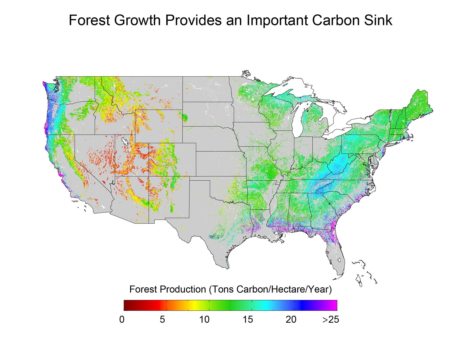 hight resolution of forest growth provides an important carbon sink carbon sink climate change assessment business
