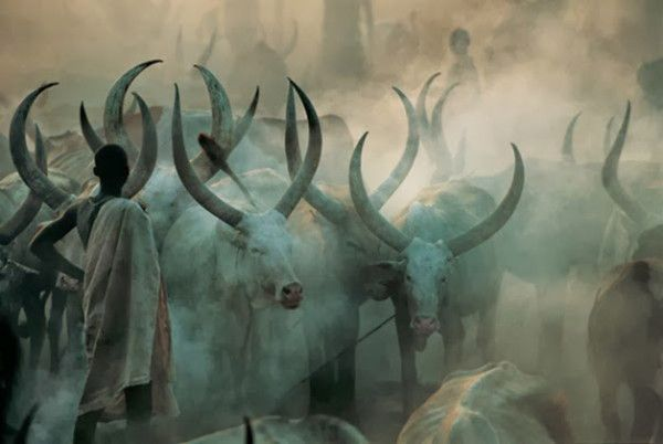 An Amazing Insight Into the Life of The Dinka People of