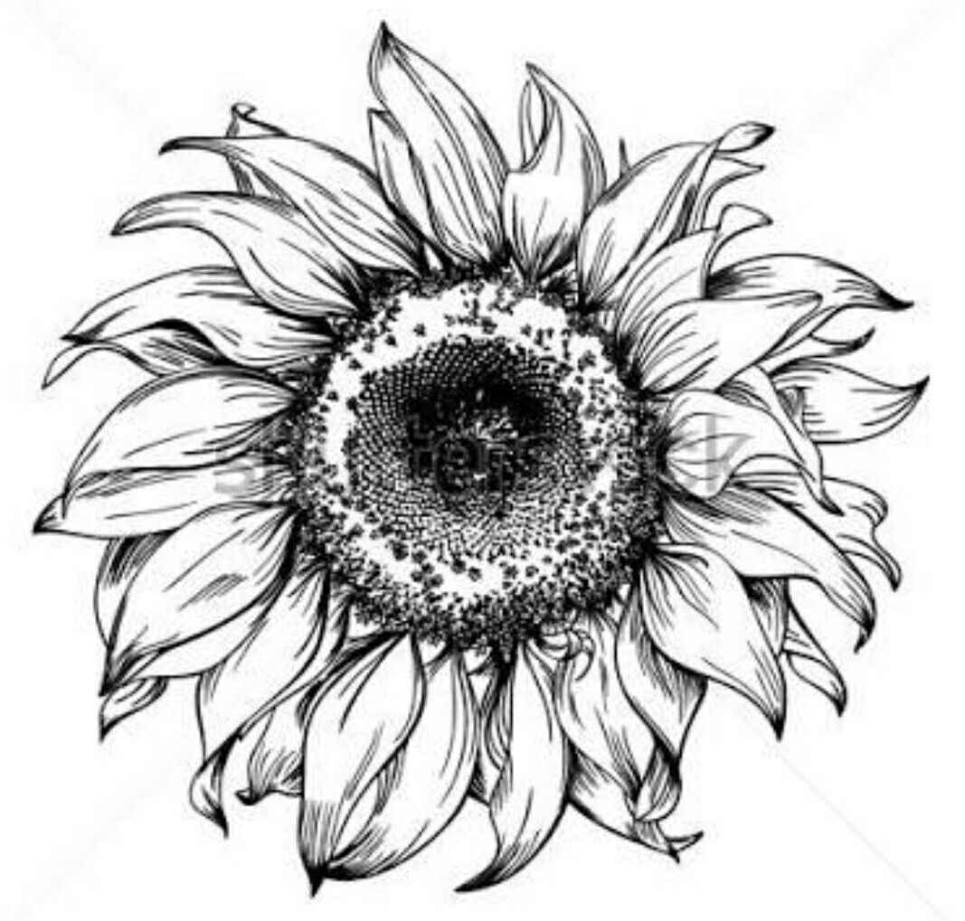 coloring pages of realistic sunflowers | Pin by San-Lee C Lessing on that permanent beauty | Ink ...