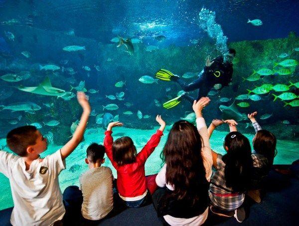 The Best Aquariums in the US | Amazing aquariums, Kids ...