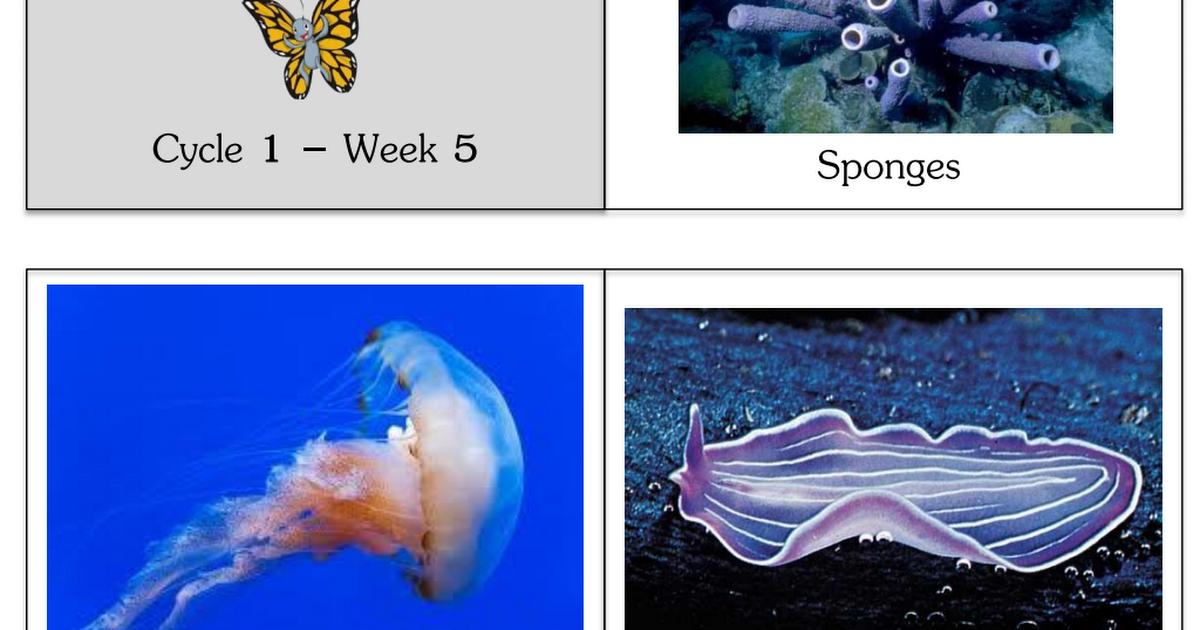 Pdf the biology of invertebrates