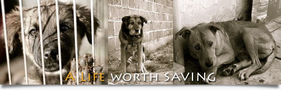 Dog Rescue Brockville Ontario