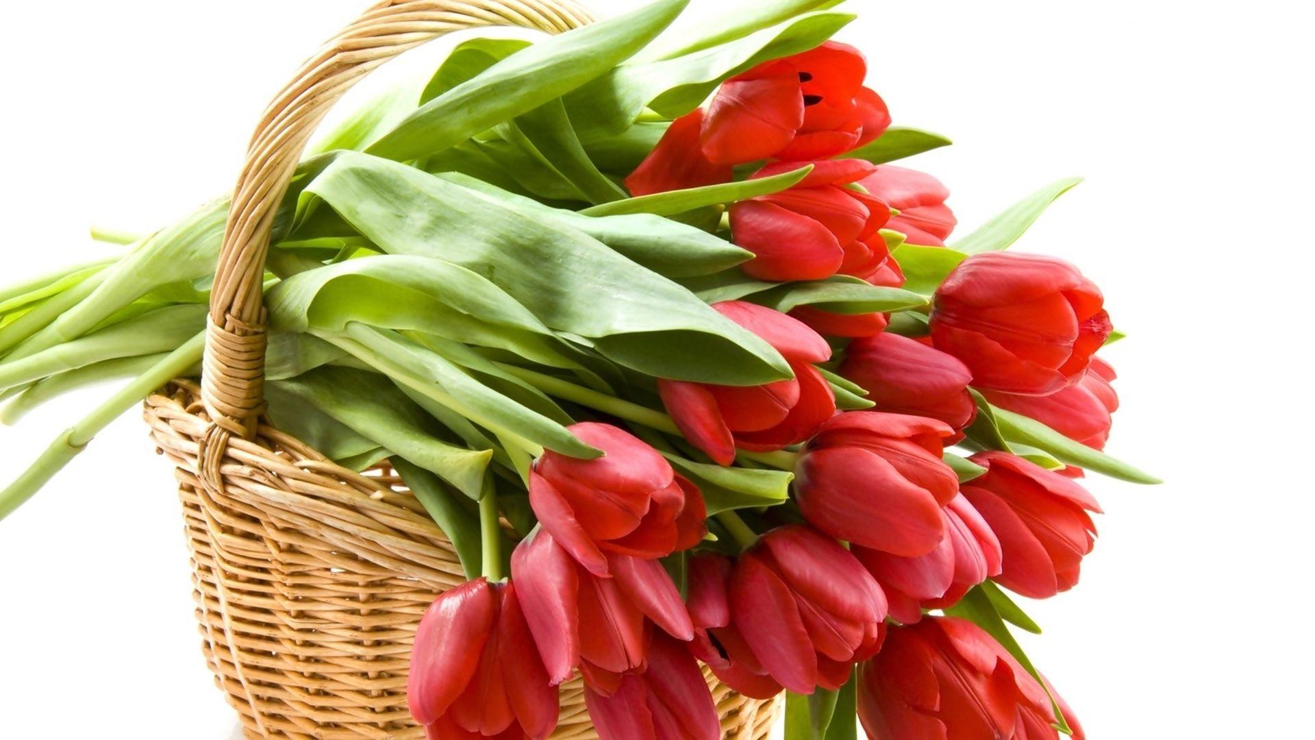 Kosz, Tulipanów | Piękne kwiaty, Tulipany, Kosz