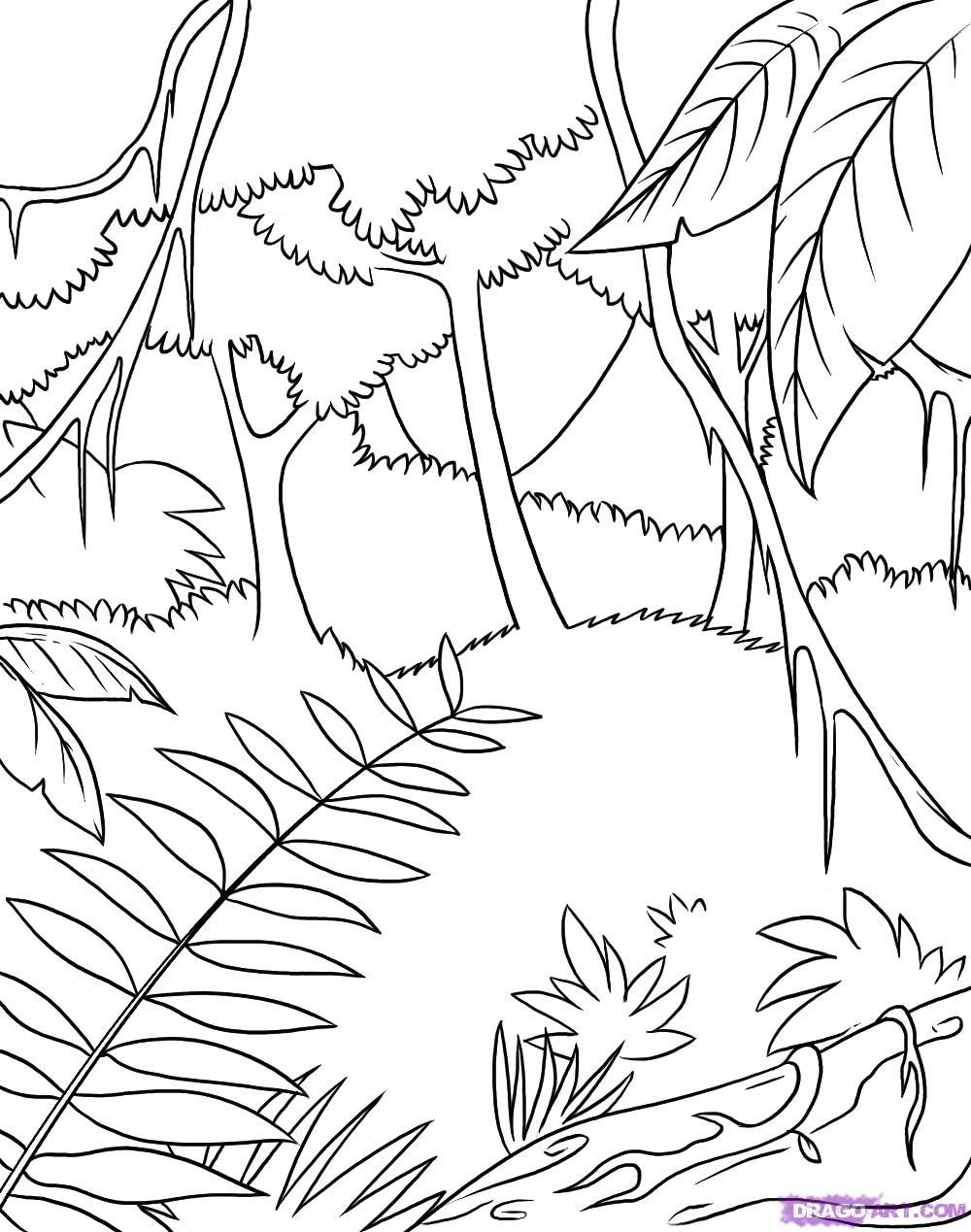 safari coloring pages | how to draw a rainforest step 6 | jungle ...