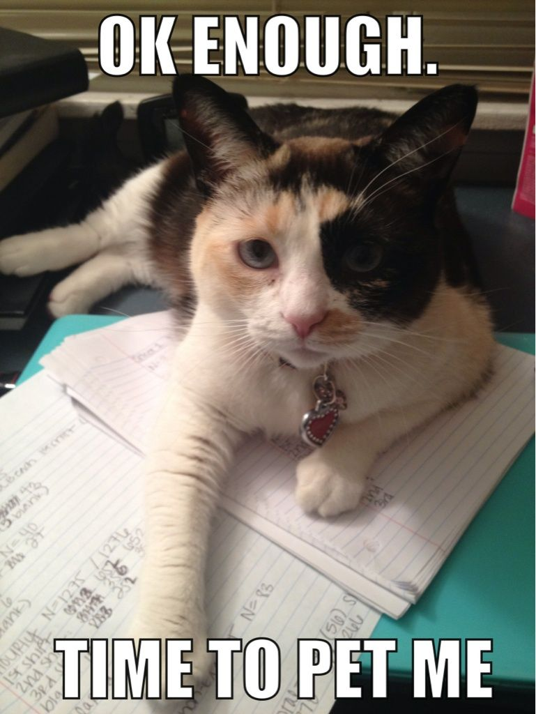 My cat only letus me do homework for short periods of time before