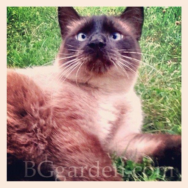 Boo Kitty In The Garden : My Garden Helper!