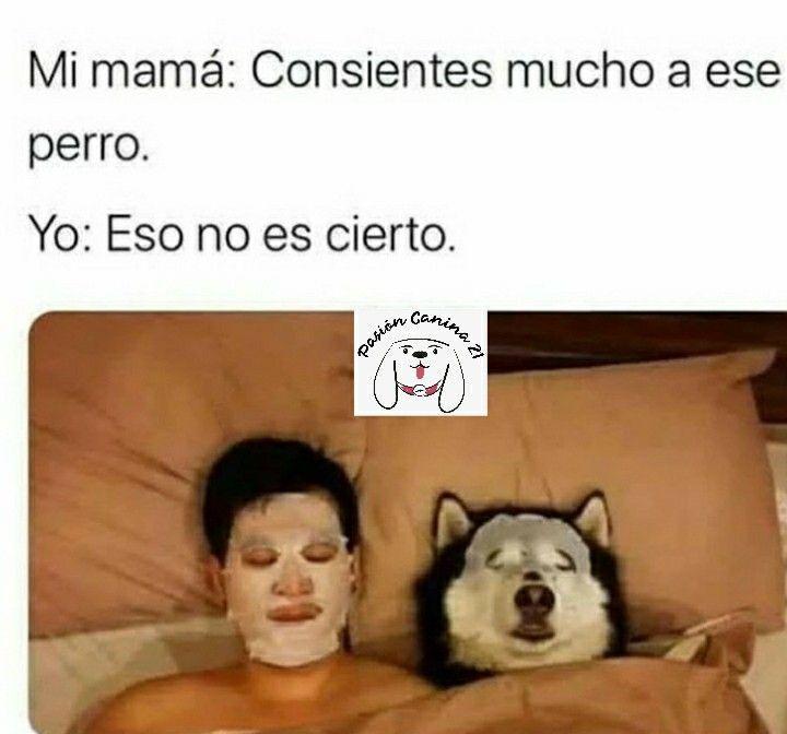 Siguenos En Facebook E Instagram Como Pasioncanina21 En 2020 Memes Divertidos Memes Comicos Memes Sarcasticos
