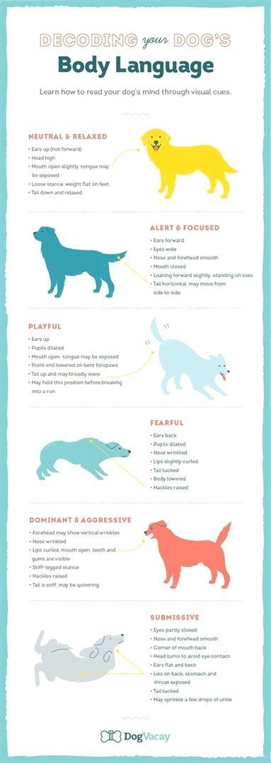 Dog Training Bell Keystone Dog Training York Pa Dog Training