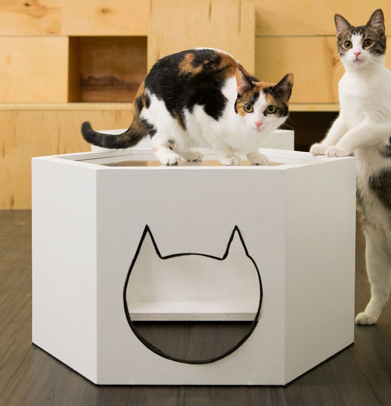First Design Cat Cafe In Nyc With Images Cat Cafe Cat Hotel Cat City