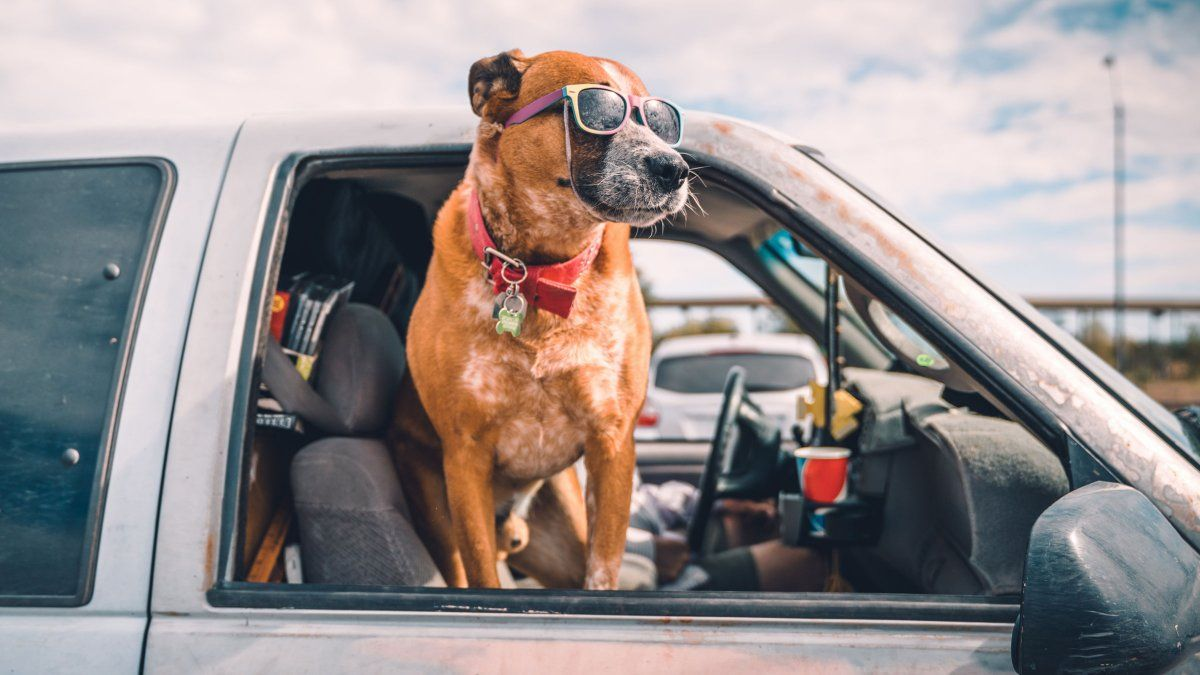 8 Ways To Make Traveling With Your Dog Easier Dog Friends Best