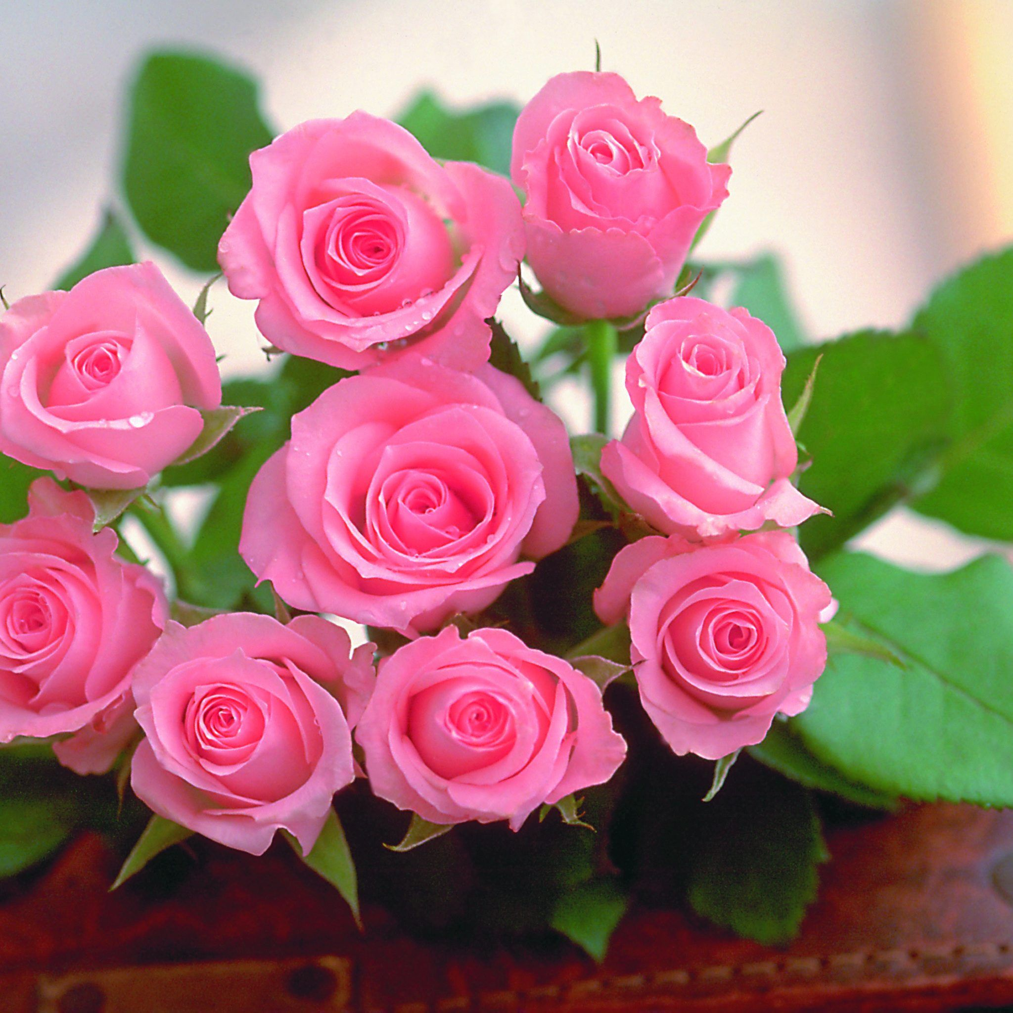 Pin By Besnikh On Beautiful Flowers With Images Beautiful Flowers Wallpapers Pink Rose Flower Flower Seeds