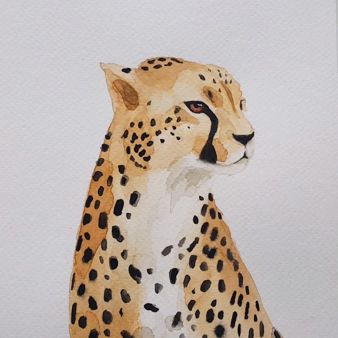 Watercolor painting time lapse of a Cheetah
