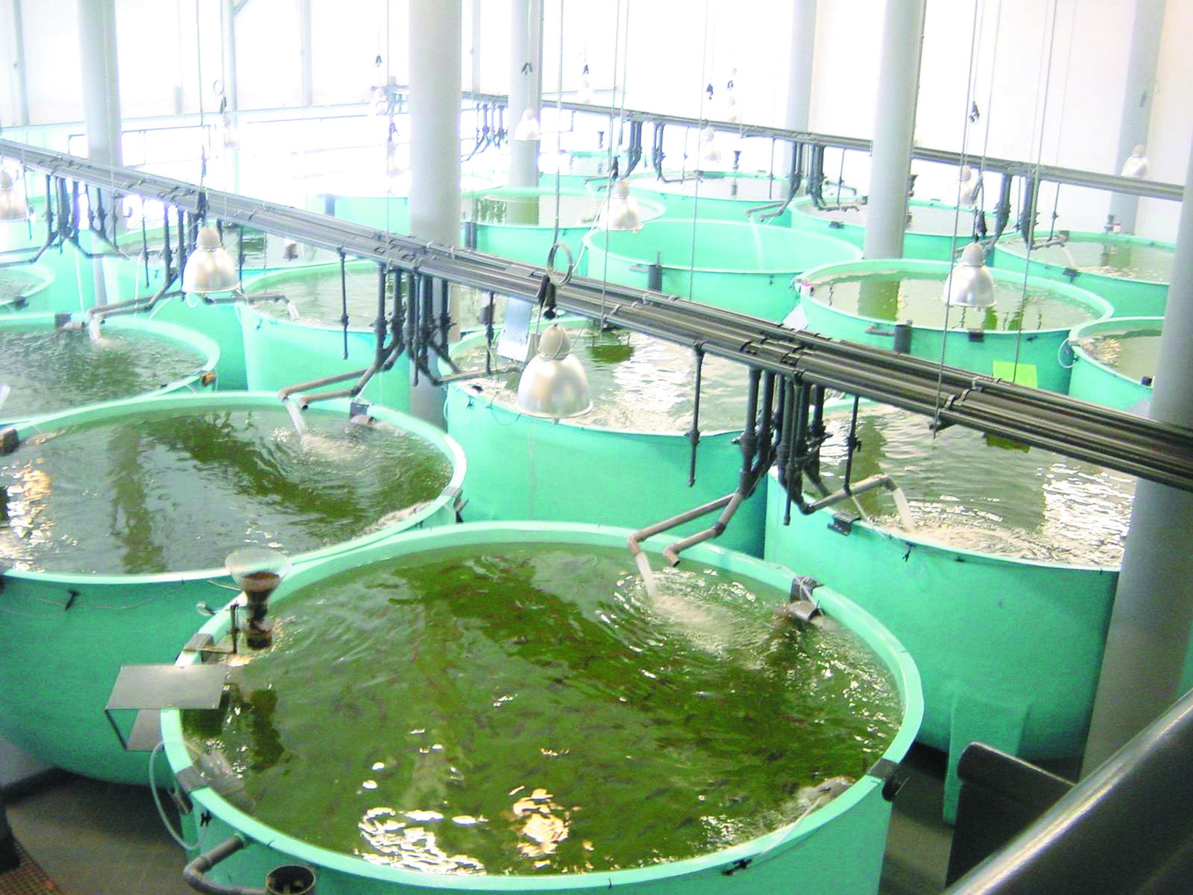 fiskbajs till växtnäring måste vara en bluff