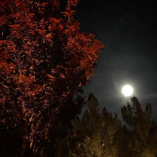 Such A Cool Eerie Evening Moon - photo by Aaron Goodwin (@aarongoodwin) • Instagram photos and videos of #GhostAdventures #DeadlyPossessions