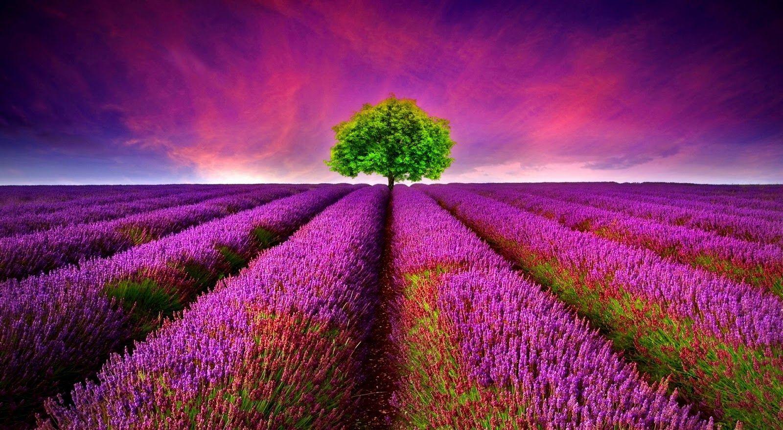 World Most Beautiful Romantic Nature