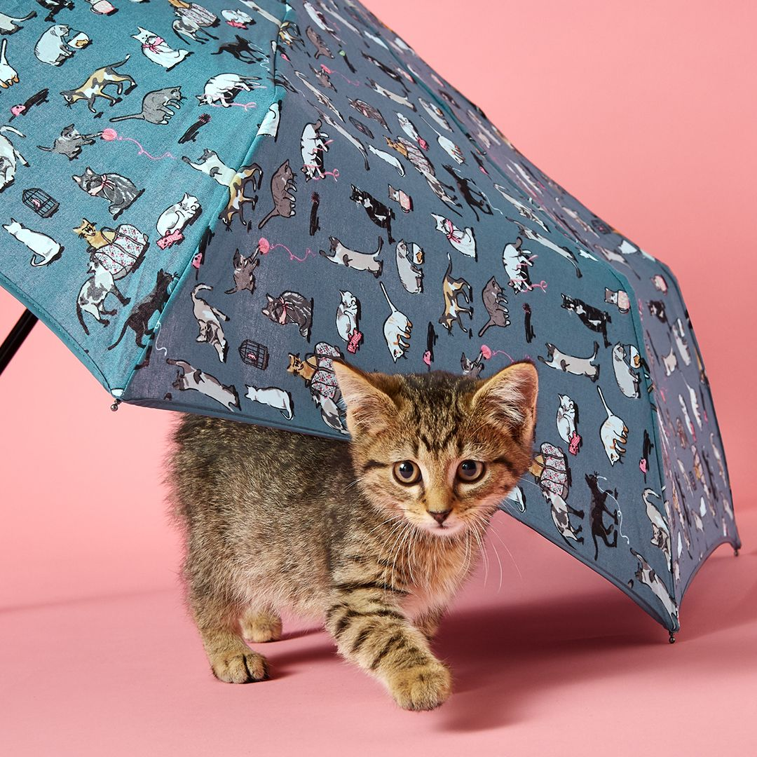 Park Art|My WordPress Blog_Vera Bradley Cats Meow Lanyard