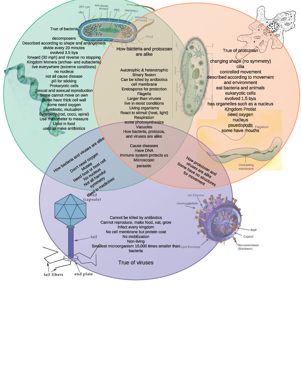 BacteriaVsViruseVsProtozoanThis+One_Page_1.png | Science ~ Middle ...