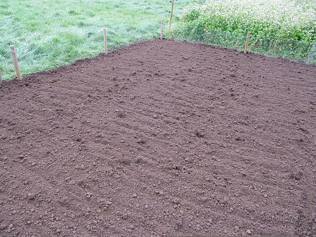 F You Re Wanting To Plant And Grow Your Own Lawn Then Make Sure To Check Out These Tips And Hints On Sowing Your Own Survival Gardening Grass Seed Seeding Lawn