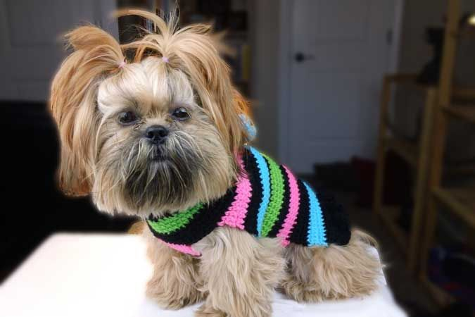 Find a free crochet dog sweater pattern that will keep your dog warm ...
