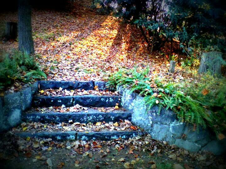 Morris Park In Marioncounty Wv A Beautiful Park With Hidden Stone Staircases In More Than One Place Beautiful Park Virginia Hill West Virginia
