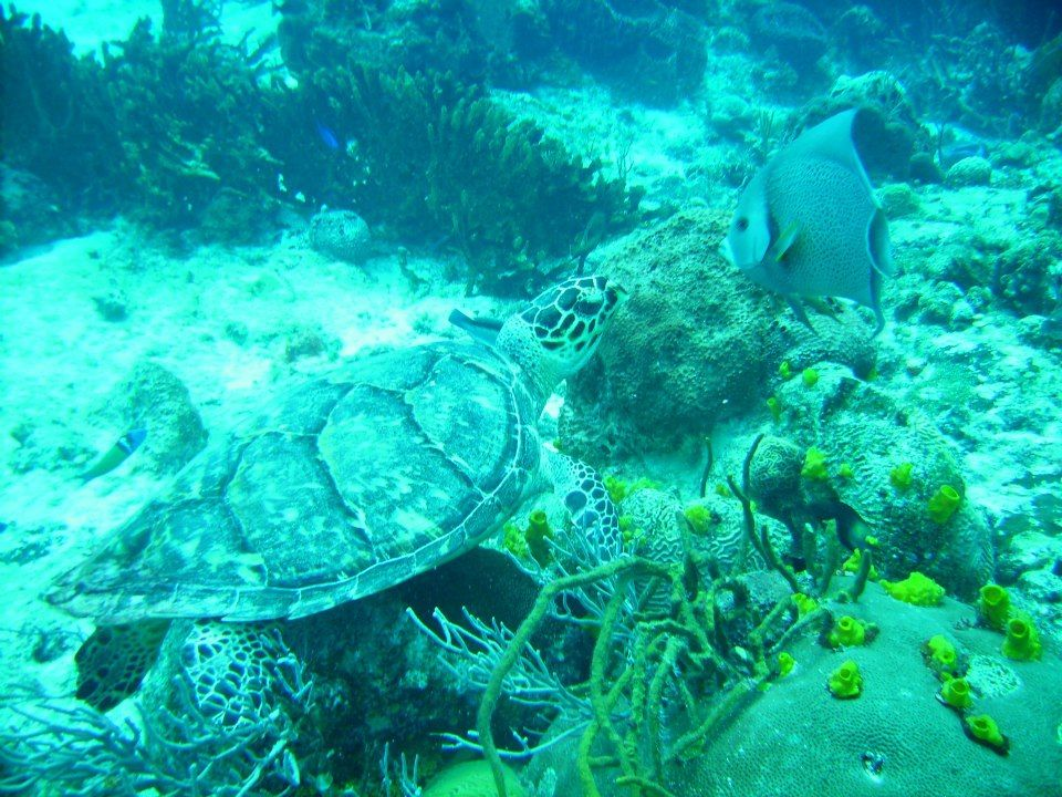 Scuba Diving In Cozumel, Mexico.