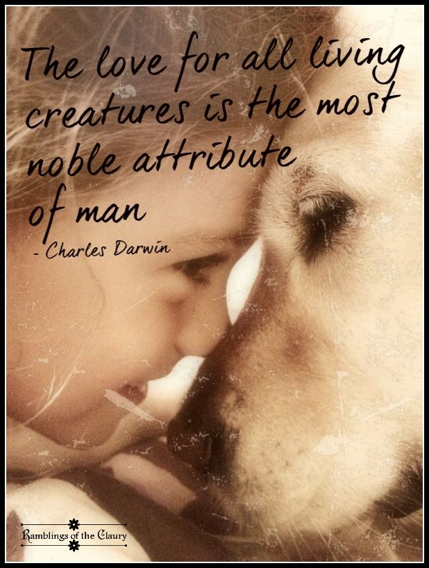 Nobility | Animal love quotes, Dog quotes, Animal quotes