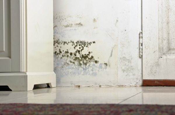 How To Get Rid Of Mold Spores In Basement