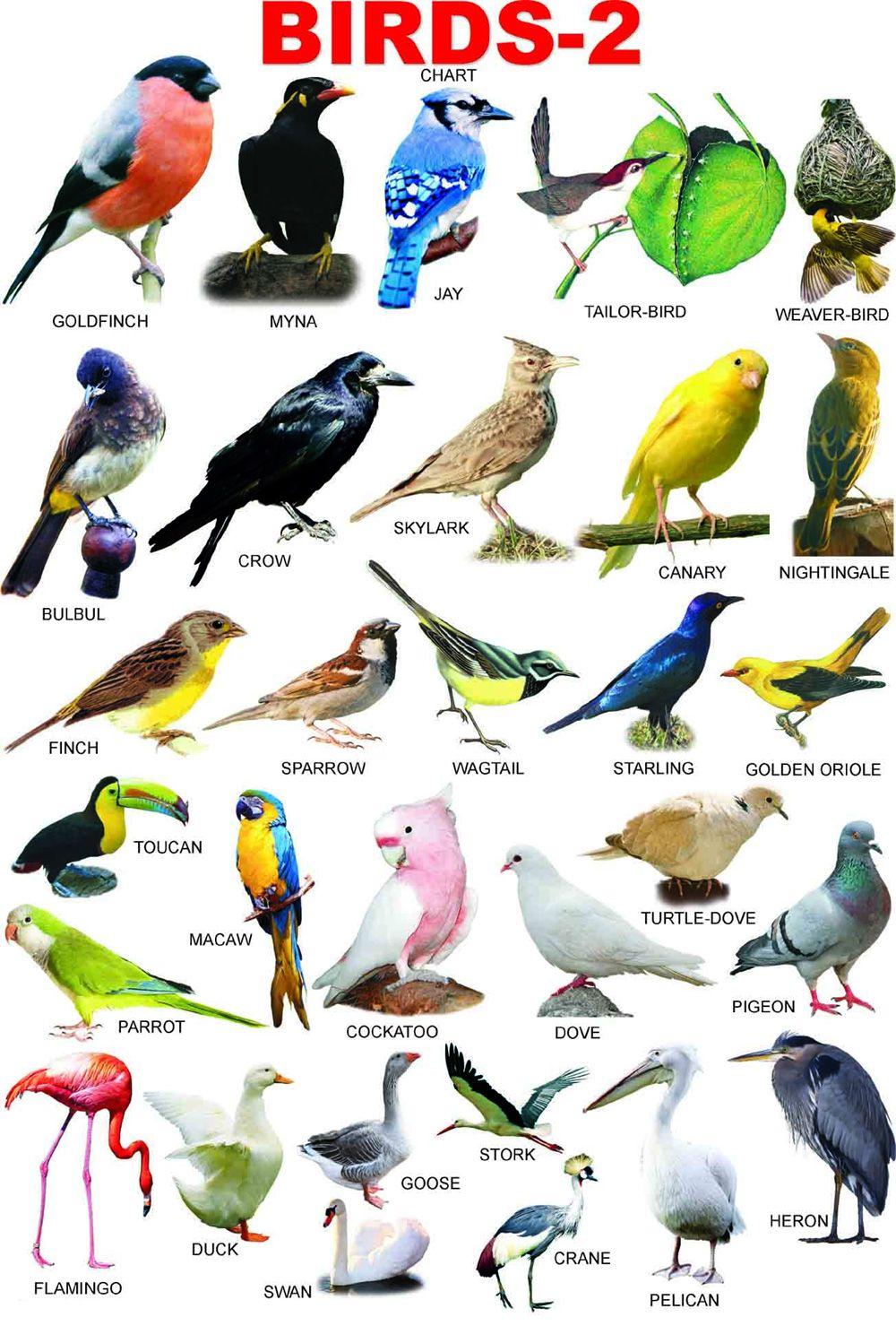 Beautiful Birds Images HD For Free Download http