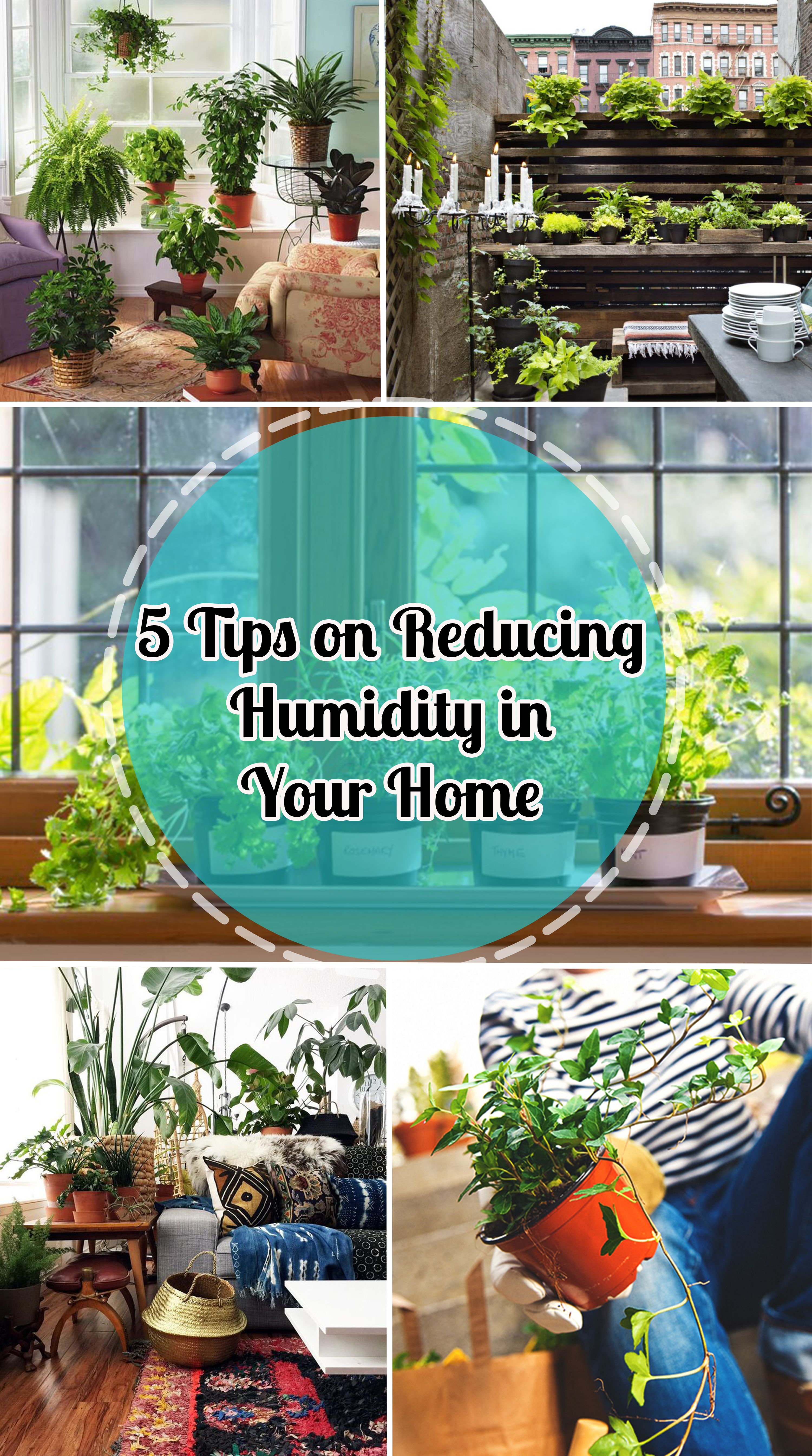 5 Tips On Reducing Humidity In Your Home Home Tips Dehumidifiers