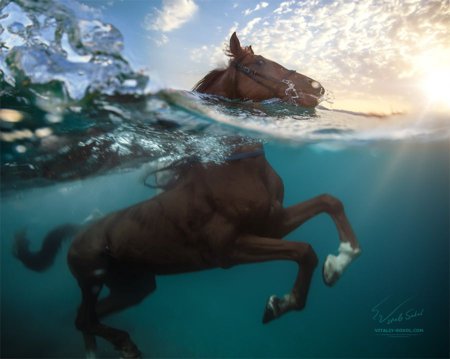 """One Horse Power. One Ocean Life. - <a href=""""http://www.shutterstock.com/ru/pic-326337185/stock-photo-a-horse-swimming-in-sea-running-through-water-underwater-part-is-in-motion-with-green-blue.html"""">Big image here: A horse swimming in sea. Running through water. </a> © Vitaliy-Sokol.com Red sea, underwater photo of running-swimming horse in sea water. Thx for your opinions."""
