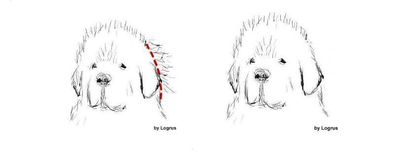 Dog Grooming – Hair Removal and Tools | Dog Grooming Tips