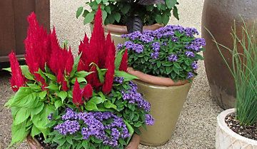 Checklist For Choosing Great Container Plants Garden Containers Tractor Supply Co Plants Garden Containers Trees To Plant