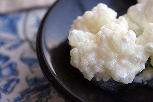 Wissenswertes über Kefir / Milchkefir (Tibetanischer Pilz)