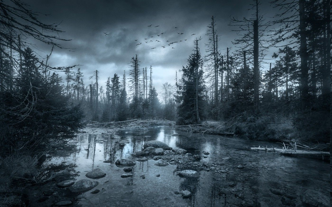 Nature Landscape River Forest Clouds Morning Birds Flying Trees Dark Mist Wallpapers Hd Desktop And Mobile Backgrounds