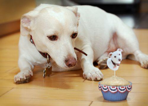 Dog Friendly Banana Cupcakes Puppy Cake Dog Friends Three Dog Bakery