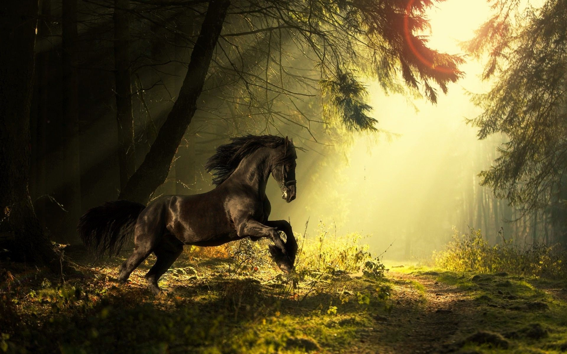 Hd wallpaper horse - Pictures Of A Motorcycle With Amarcan Flag In Backround Download Horse Wallpaper Jungle Background Hd