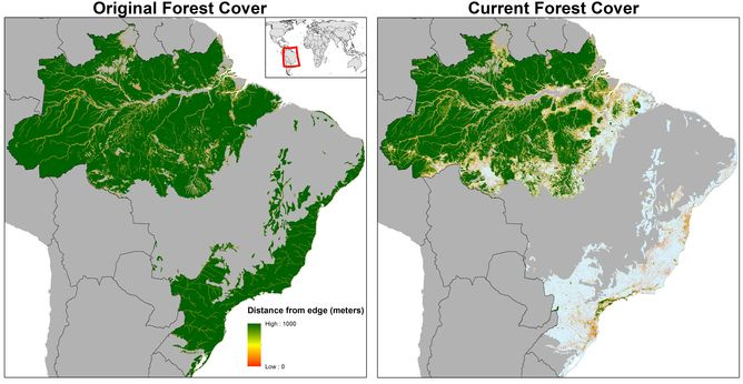 World S Forests Are Fragmenting Into Tiny Patches Risking Mass