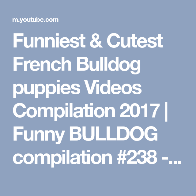 Funniest & Cutest French Bulldog puppies Videos Compilation 2017 | Funny BULLDOG compilation #238 - YouTube #funnybulldog