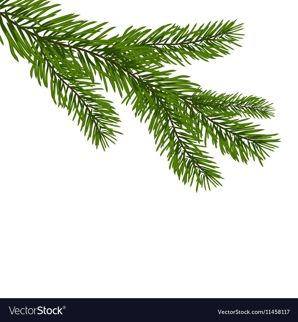 Green Realistic Branch Of Fir Fir Branches Vector Image On Vectorstock Christmas Tree Drawing Branch Drawing Branch Vector