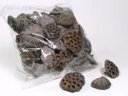 nice website but looking for dried pods, cones, etc locally...