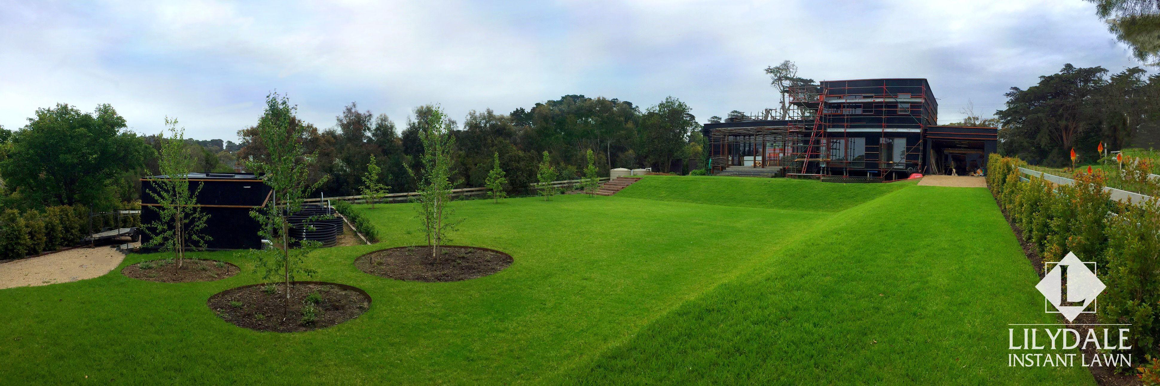 Lilydale grass