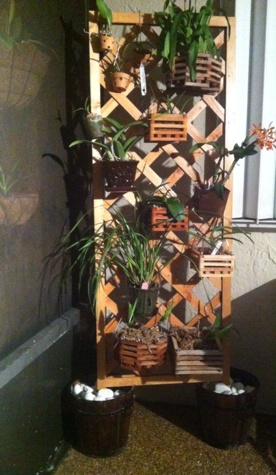 My Orchid Trellis Orchid House Diy Orchids Orchids