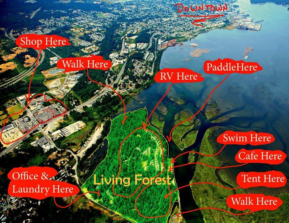 living forest oceanside campground rv park great rv. Black Bedroom Furniture Sets. Home Design Ideas
