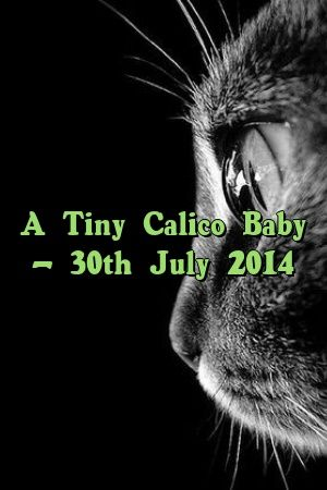 Kylie Black Tells About A Tiny Calico Baby – 30th July 2014   #meowpassion  #meow  #catoftheday  #pet  #Adult  #Choose  #catcondo  #Guide