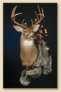 Finished Wall Habitat Taxidermy Display Taxidermy Deer Mounts