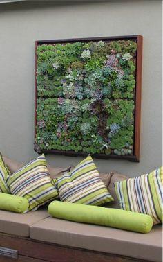 wanddeko ideen grünpflanzen sukkulenten